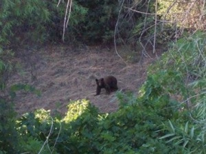 I am grateful that there are bears where I ride and hike, and that I often get to see them.