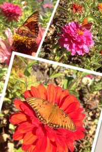 My heart sores every day because this is my view walking into and out of my office.  I pass through this glory every day to go to work, and then again to come home.  Late summer butterfly photos.