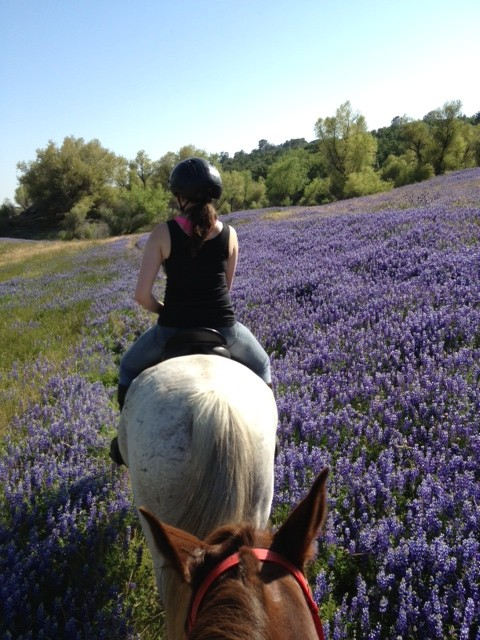 Riding through lupine with Julia